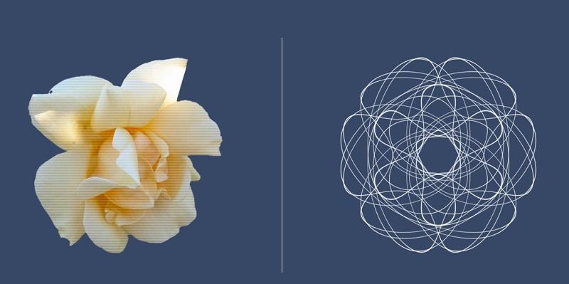 flower_-_analog_vs_digital